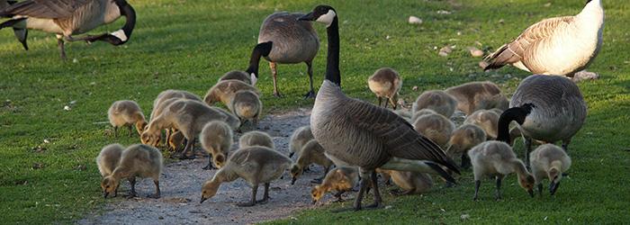 bird-sanctuary-neepawa-community-what-to-do-in-neepawa-bird